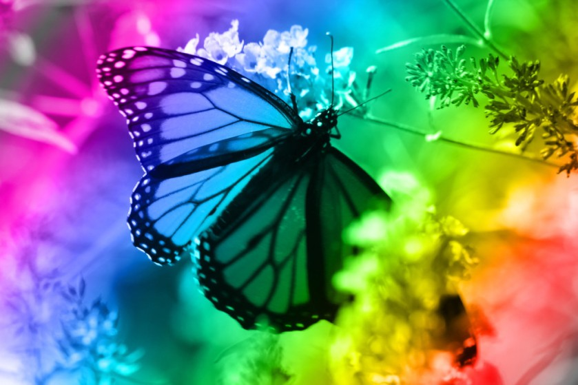 Butterflies and rainbows, all things happen for a reason